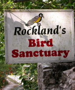 Rockland bird sanctuary birdwatching