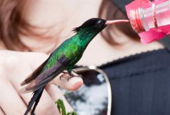 hand feeding hummingbird Rocklands Bird Sanctuary