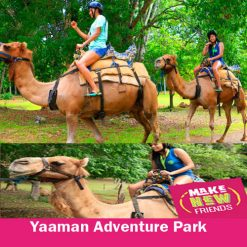 Camel Trekking Safari Experience