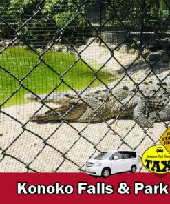 konoko falls alligator